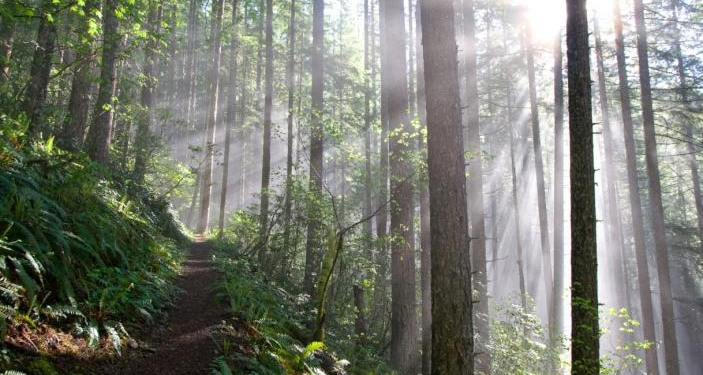 Forest with rays of sun filtering through